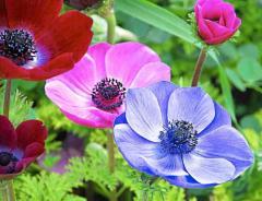 Цветы многолетние садовые