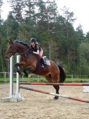 Horses for show jumping