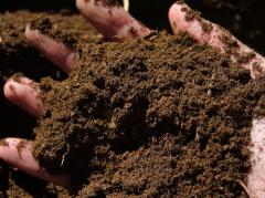 High-moor peat, fertilizer