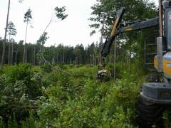 Расчистка и санитарная вырубка леса